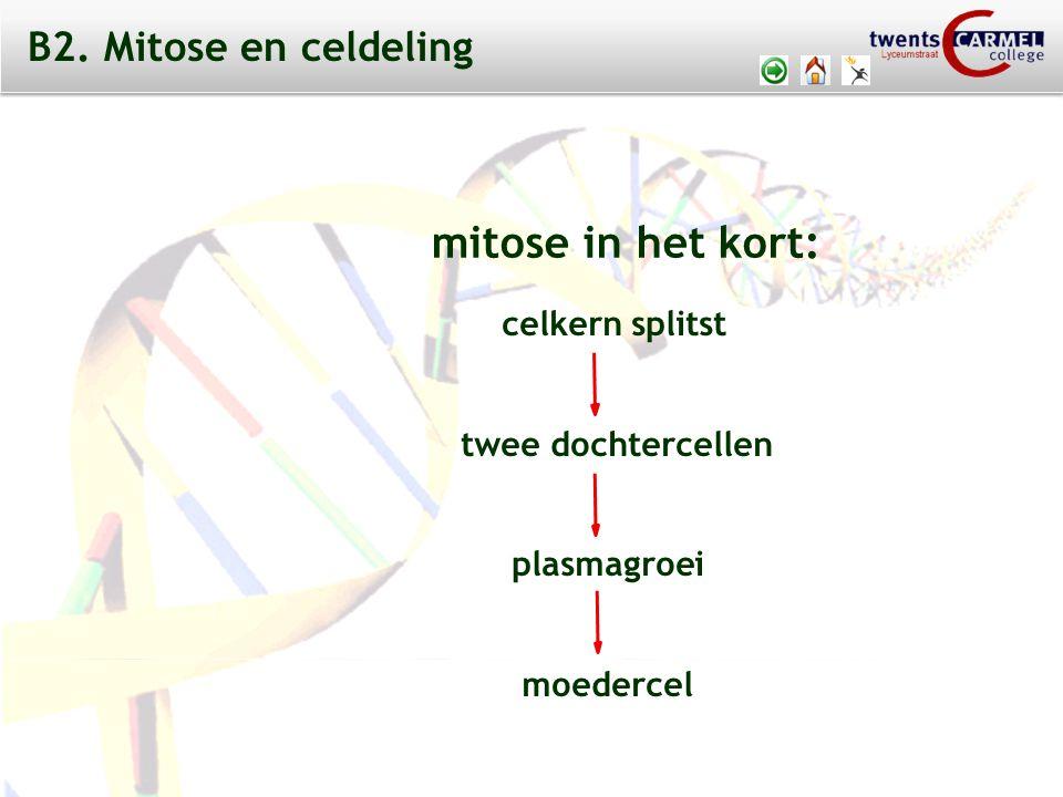 mitose in het kort: B2. Mitose en celdeling celkern splitst