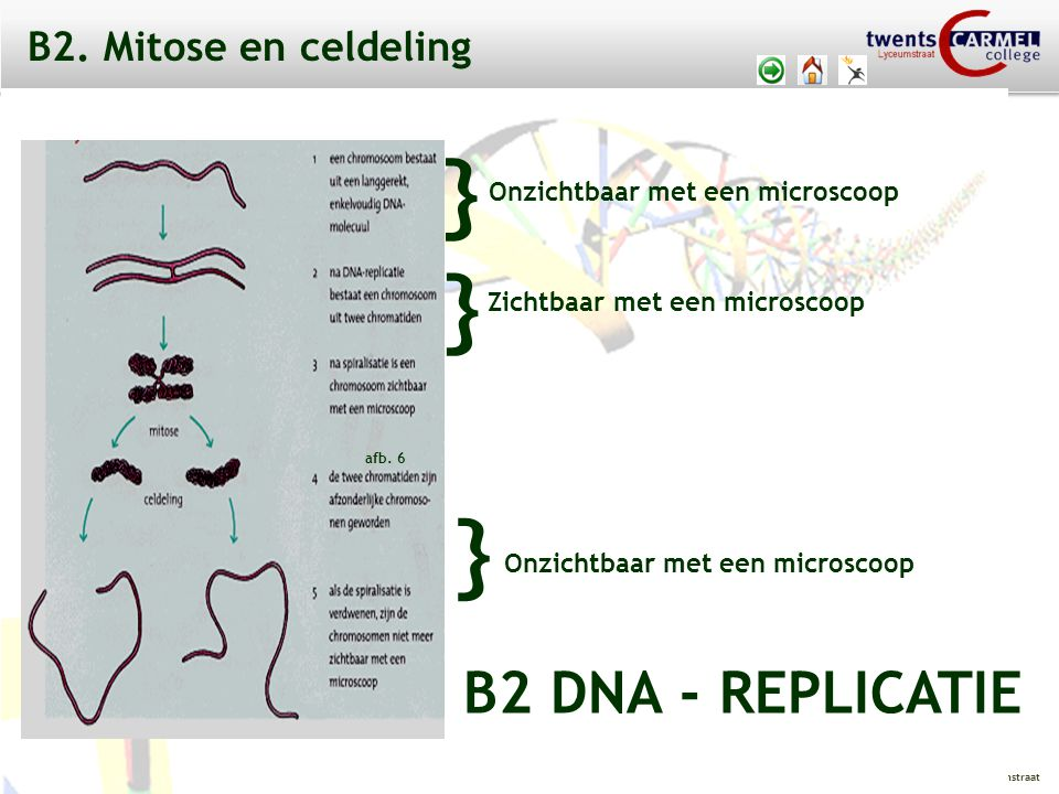 } } } B2 DNA - REPLICATIE B2. Mitose en celdeling