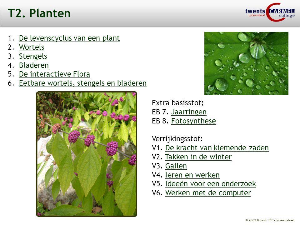 T2. Planten De levenscyclus van een plant Wortels Stengels Bladeren