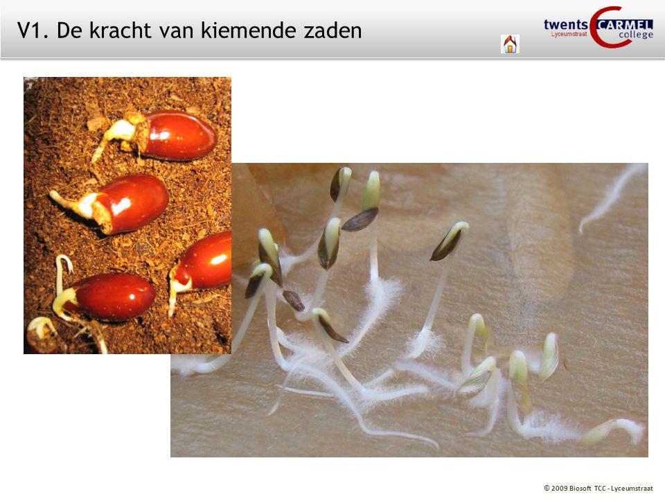 V1. De kracht van kiemende zaden
