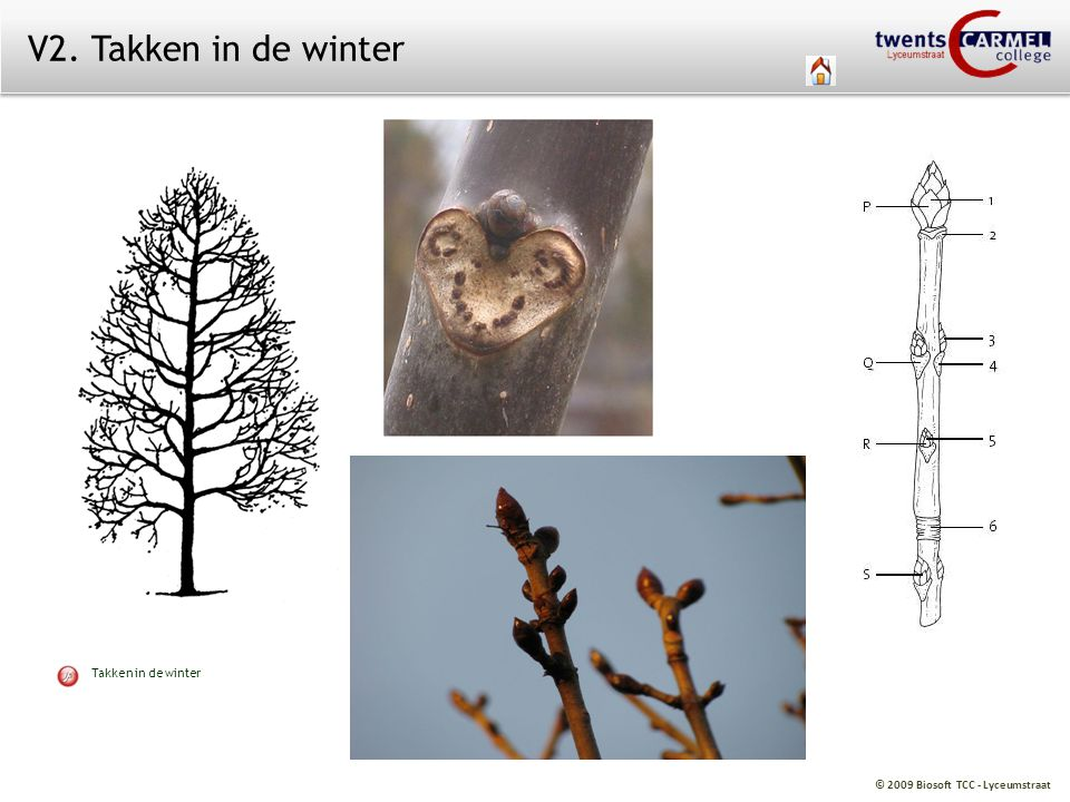 V2. Takken in de winter Takken in de winter