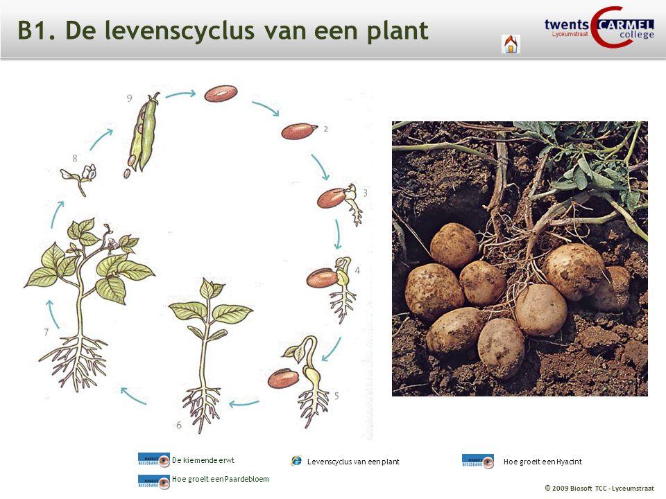 B1. De levenscyclus van een plant