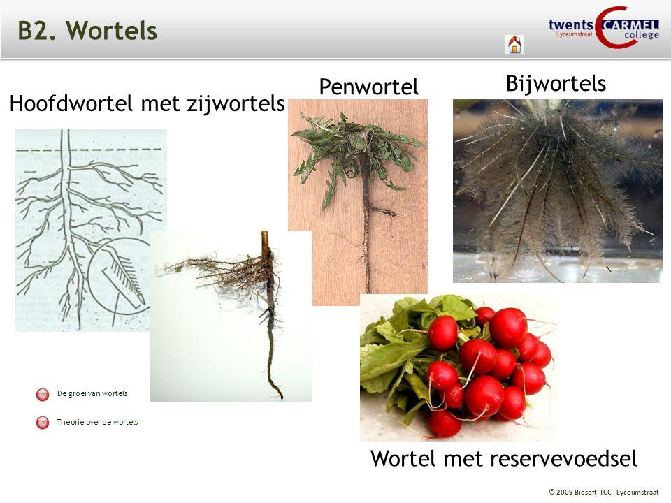 B2. Wortels Bijwortels Penwortel Hoofdwortel met zijwortels