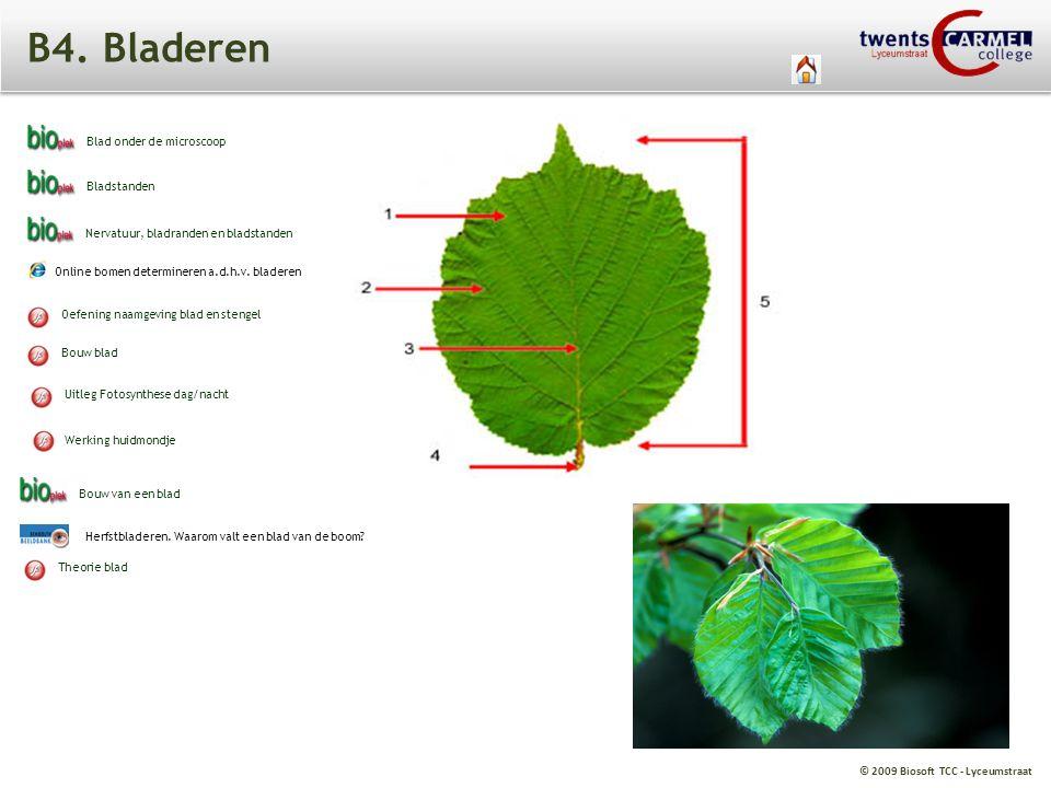 B4. Bladeren Blad onder de microscoop Bladstanden