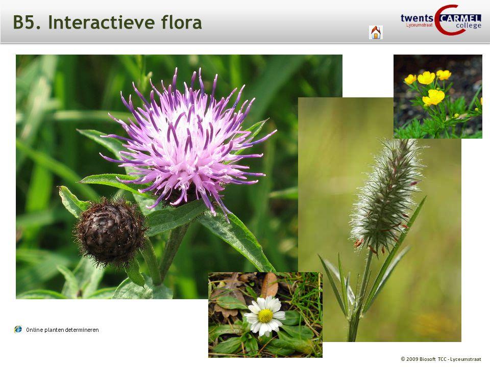 B5. Interactieve flora loofboom AARD enkelvoudig blad BLAD