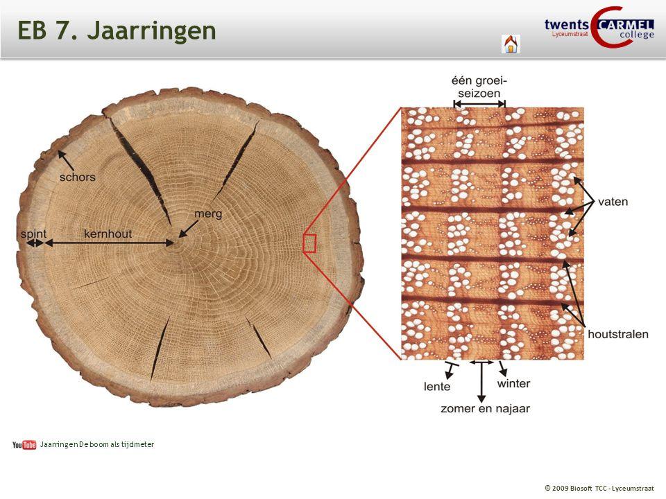 EB 7. Jaarringen Jaarringen De boom als tijdmeter