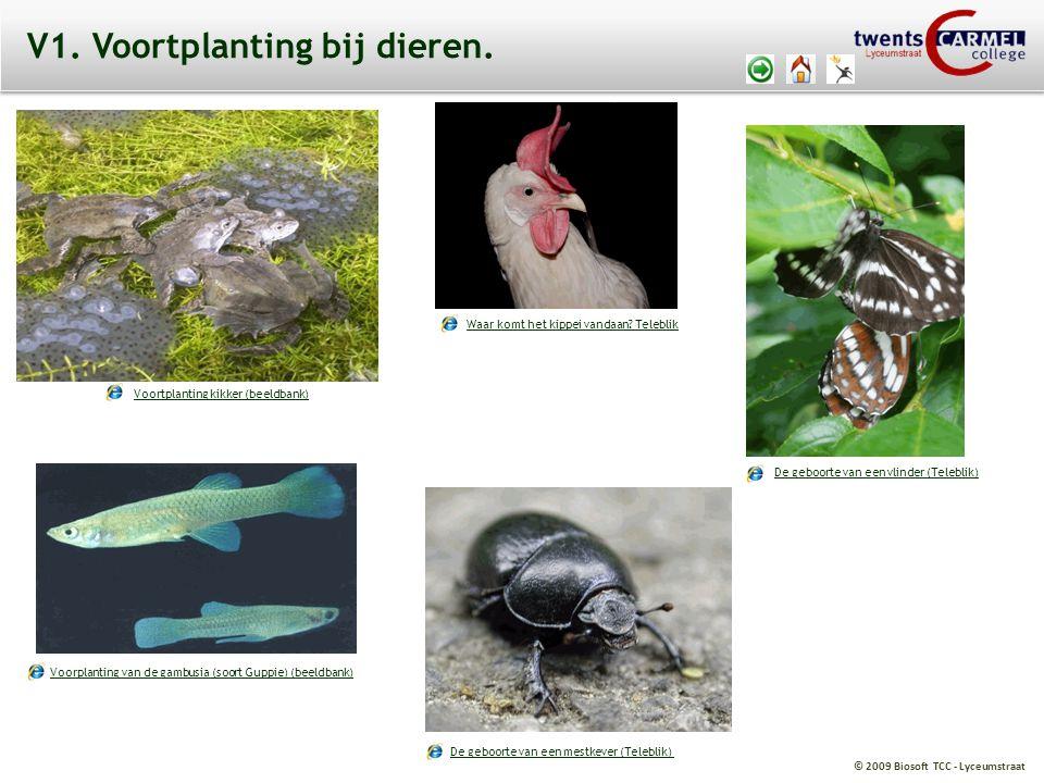 V1. Voortplanting bij dieren.