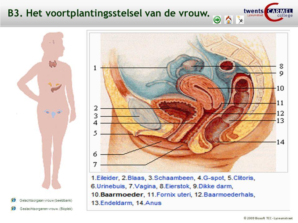 B3. Het voortplantingsstelsel van de vrouw.