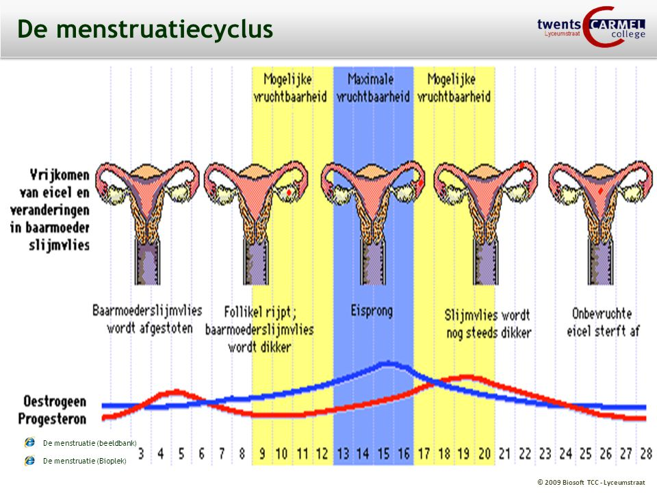 De menstruatiecyclus De menstruatie (beeldbank)