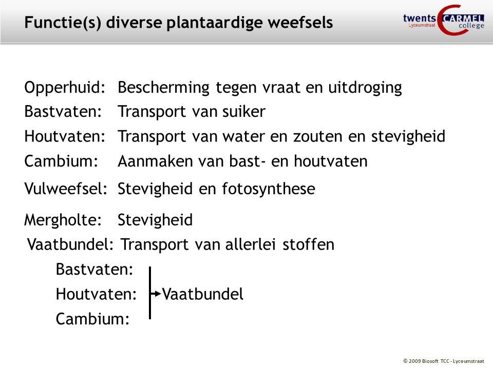 Functie(s) diverse plantaardige weefsels