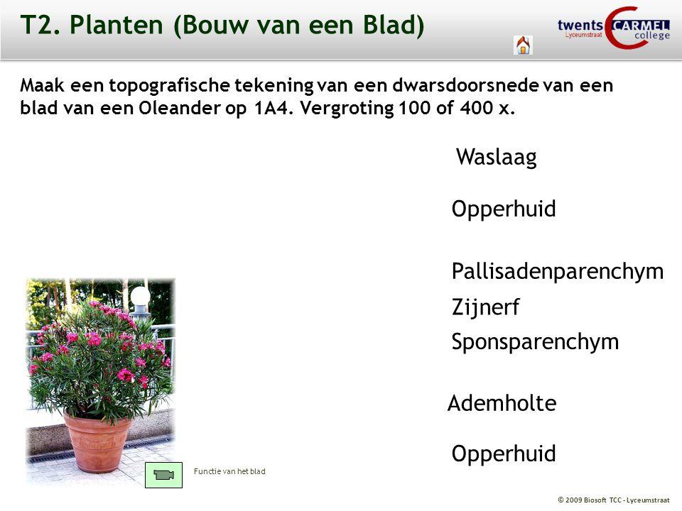 T2. Planten (Bouw van een Blad)