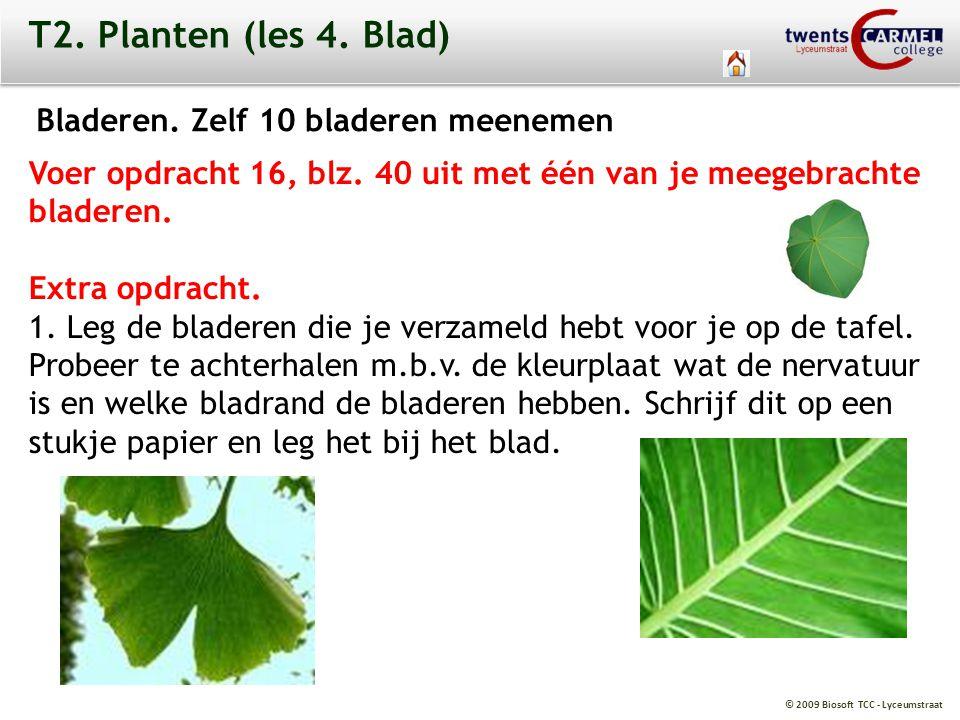 T2. Planten (les 4. Blad) Bladeren. Zelf 10 bladeren meenemen