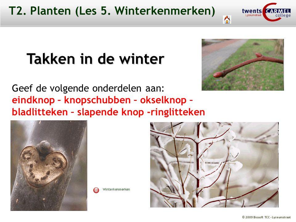T2. Planten (Les 5. Winterkenmerken)