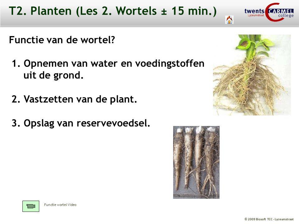 T2. Planten (Les 2. Wortels ± 15 min.)
