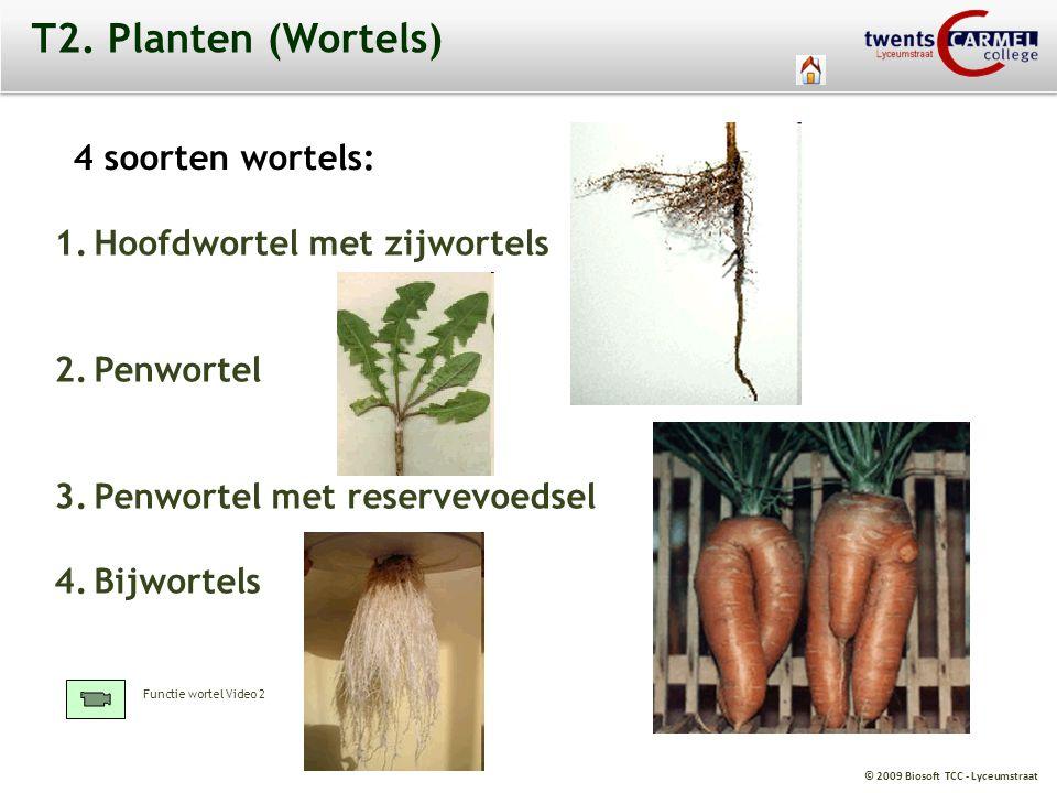 T2. Planten (Wortels) 4 soorten wortels: Hoofdwortel met zijwortels