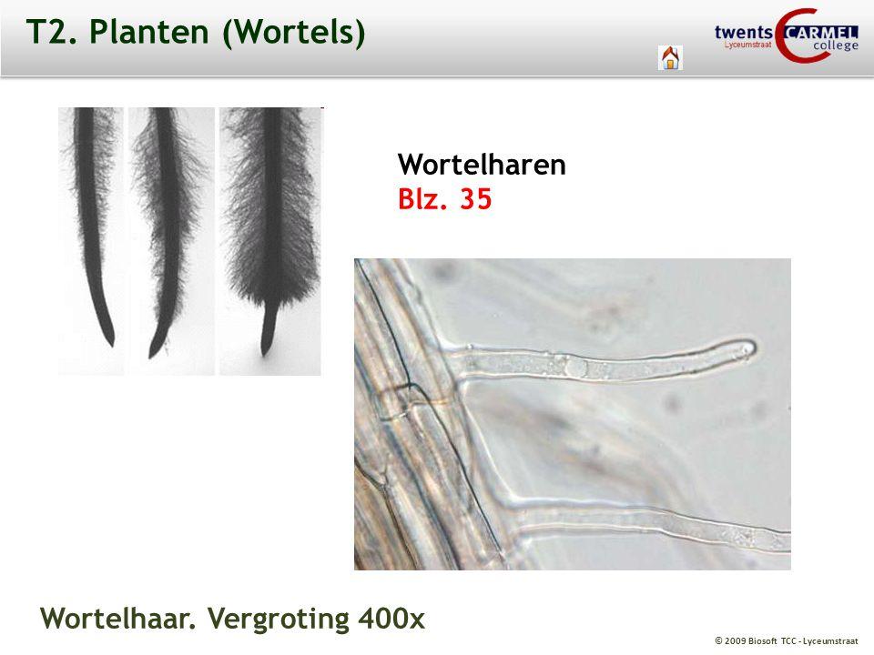 T2. Planten (Wortels) Wortelharen Blz. 35 Wortelhaar. Vergroting 400x
