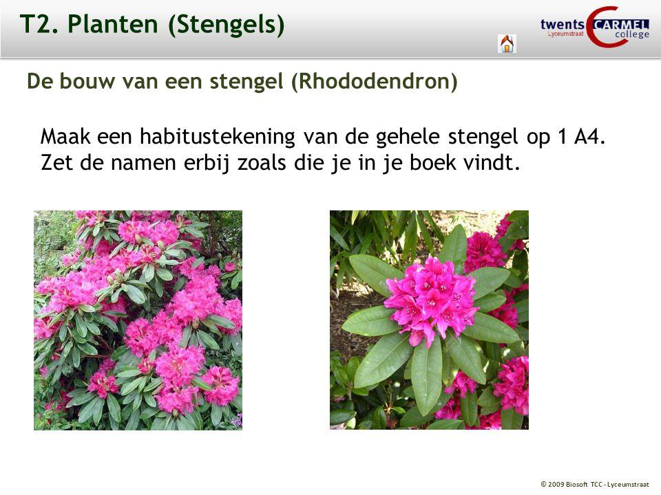 T2. Planten (Stengels) De bouw van een stengel (Rhododendron)