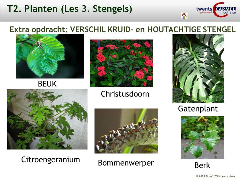 T2. Planten (Les 3. Stengels)