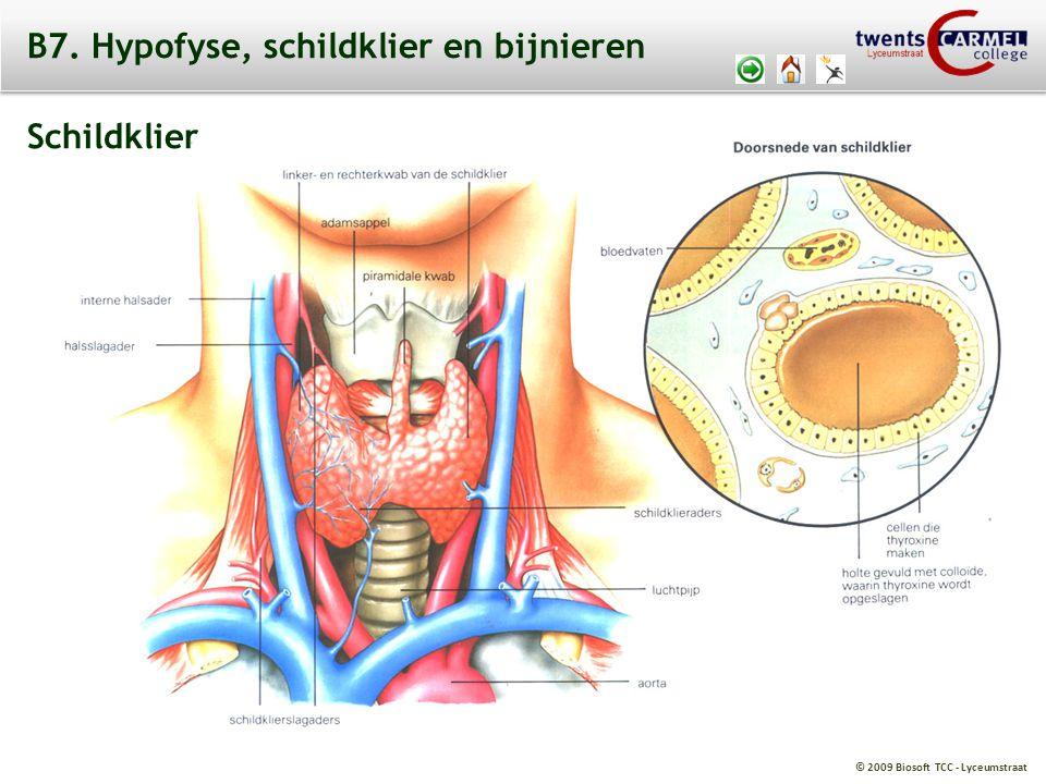 B7. Hypofyse, schildklier en bijnieren