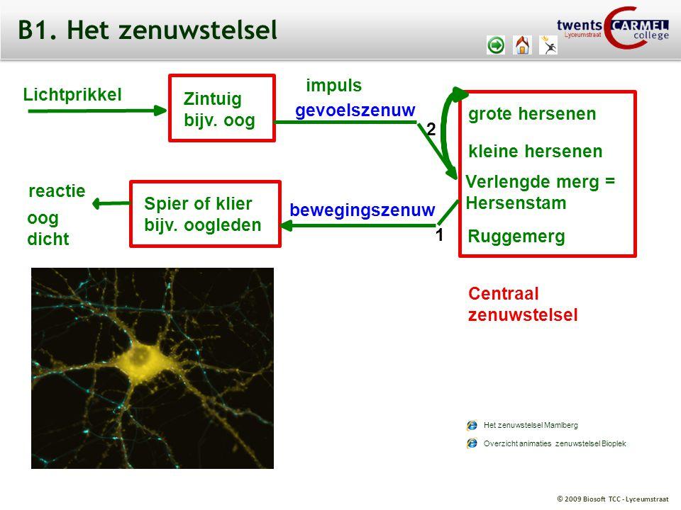 B1. Het zenuwstelsel impuls Lichtprikkel Zintuig bijv. oog