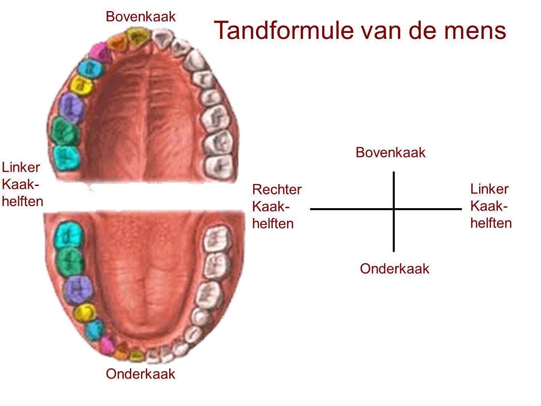Tandformule van de mens