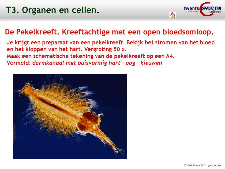 T3. Organen en cellen. De Pekelkreeft. Kreeftachtige met een open bloedsomloop.