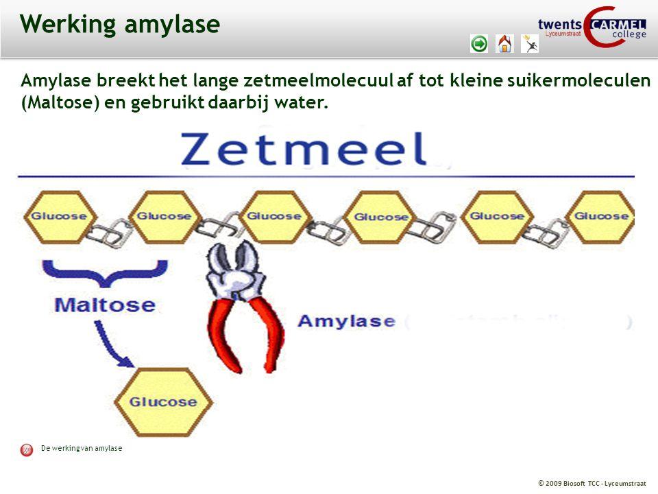 Werking amylase Amylase breekt het lange zetmeelmolecuul af tot kleine suikermoleculen. (Maltose) en gebruikt daarbij water.