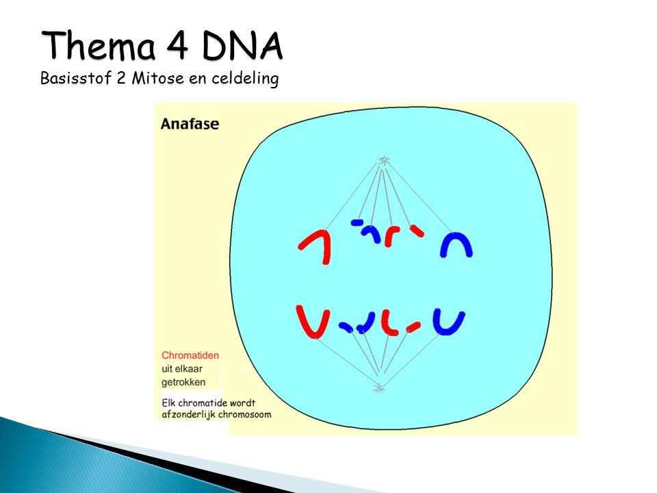 Thema 4 DNA Basisstof 2 Mitose en celdeling