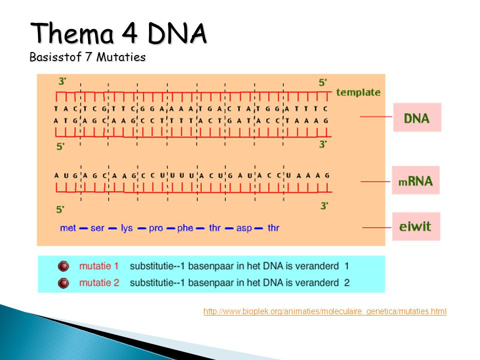 Thema 4 DNA Basisstof 7 Mutaties