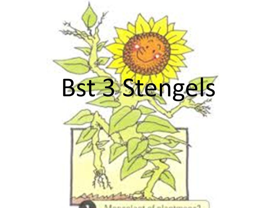 Bst 3 Stengels