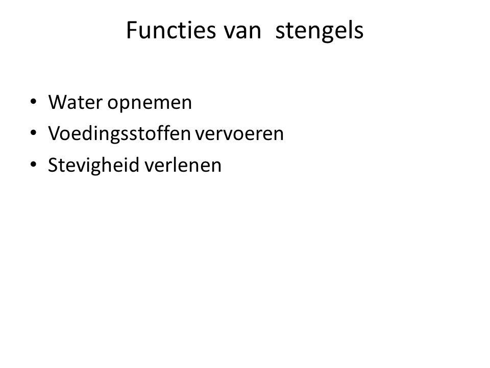 Functies van stengels Water opnemen Voedingsstoffen vervoeren