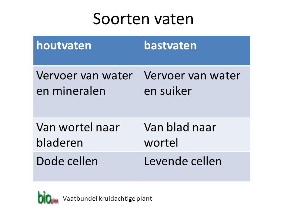 Soorten vaten houtvaten bastvaten Vervoer van water en mineralen