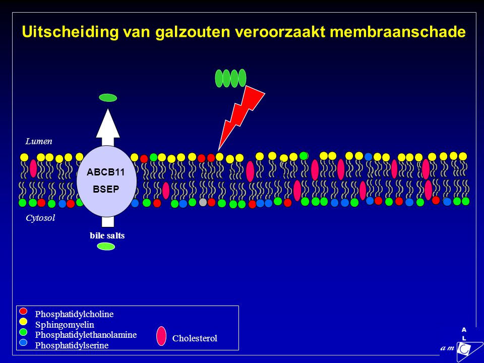 Uitscheiding van galzouten veroorzaakt membraanschade