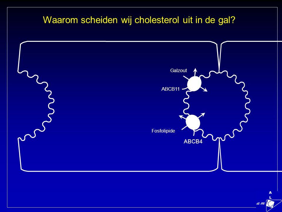 Waarom scheiden wij cholesterol uit in de gal