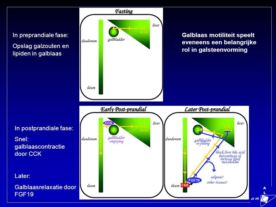 In preprandiale fase: Opslag galzouten en lipiden in galblaas. Galblaas motiliteit speelt eveneens een belangrijke rol in galsteenvorming.