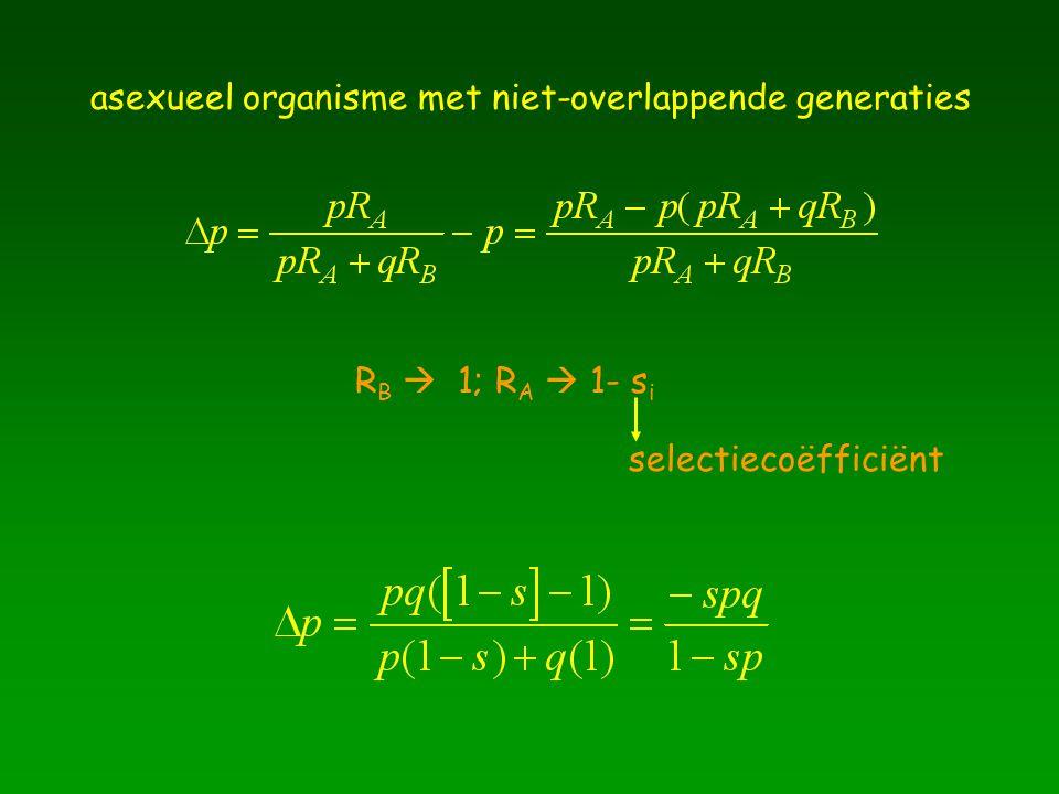 asexueel organisme met niet-overlappende generaties