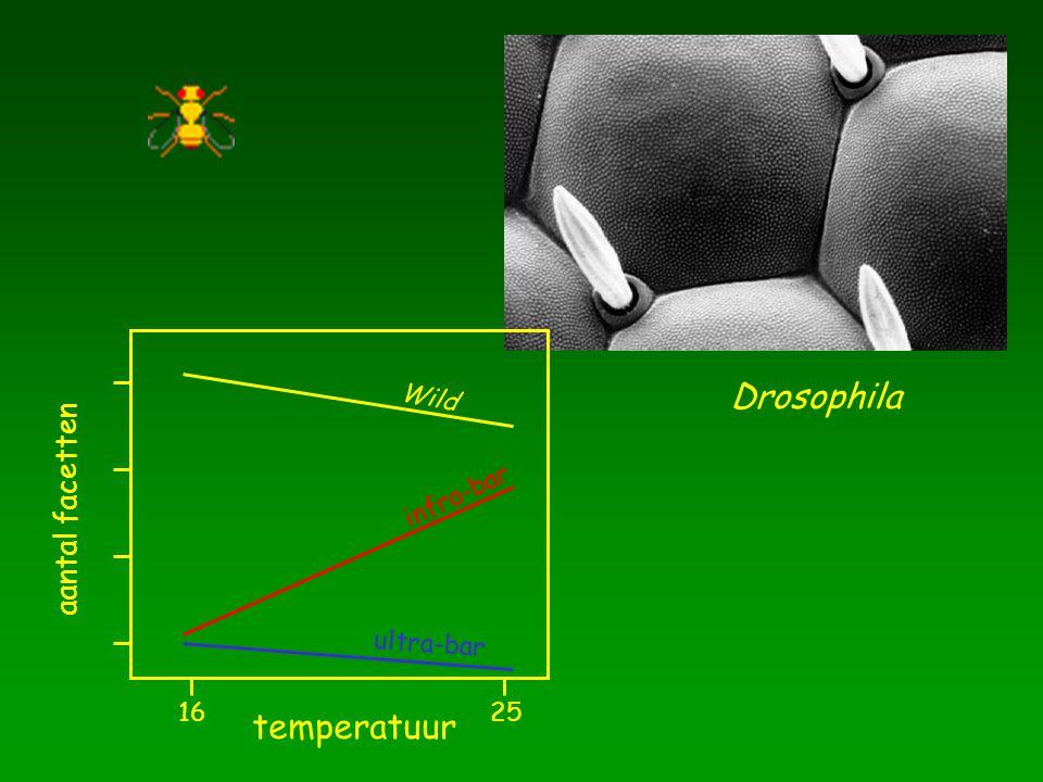 temperatuur 16 25 aantal facetten Wild Drosophila infra-bar ultra-bar