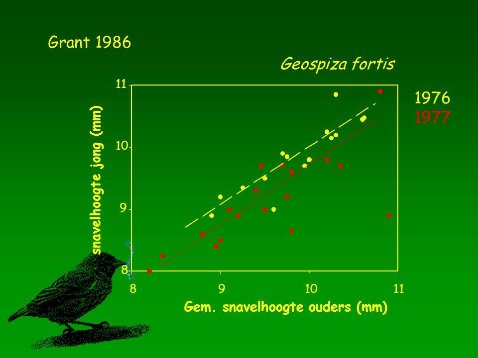 Grant 1986 Geospiza fortis 1976 1977 snavelhoogte jong (mm)