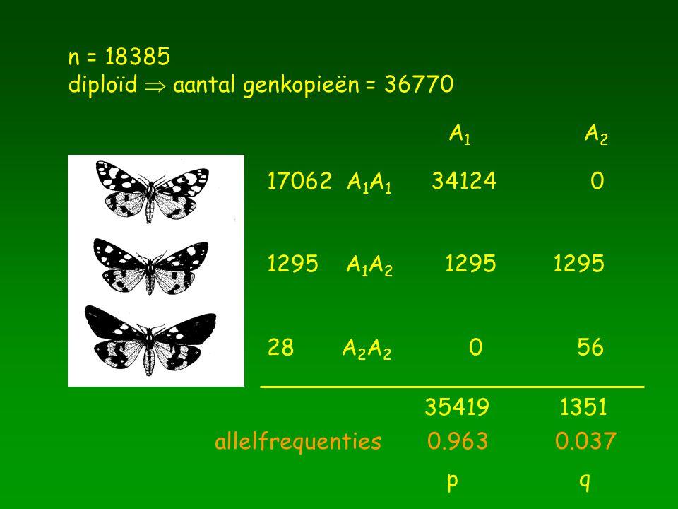 n = 18385 diploïd  aantal genkopieën = 36770. A1 A2. 17062 A1A1. 34124. 1295 A1A2. 1295.