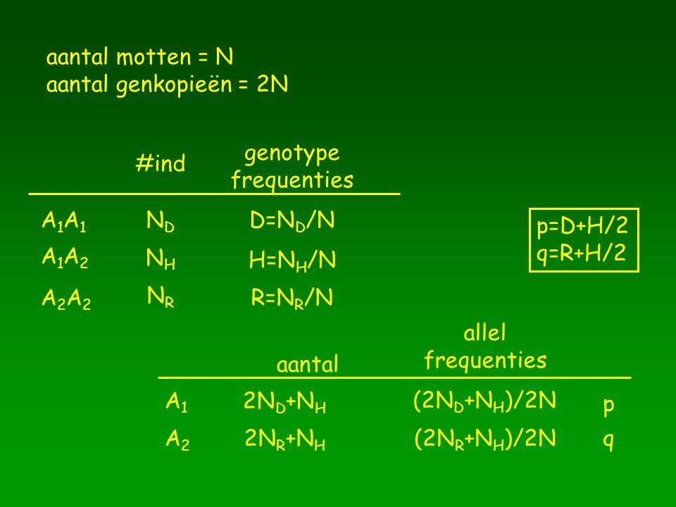 aantal motten = N aantal genkopieën = 2N. genotype. frequenties. #ind. A1A1. ND. D=ND/N. p=D+H/2.