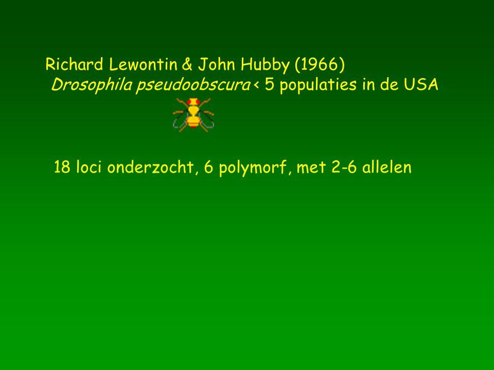 Richard Lewontin & John Hubby (1966)