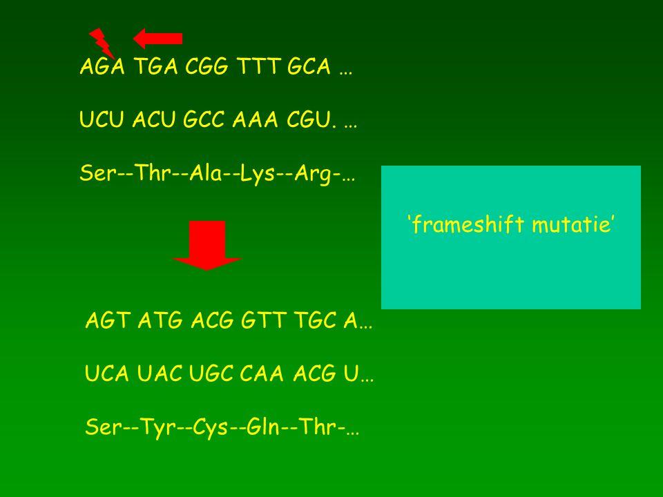 AGA TGA CGG TTT GCA … UCU ACU GCC AAA CGU. … Ser--Thr--Ala--Lys--Arg-… 'frameshift mutatie' AGT ATG ACG GTT TGC A…
