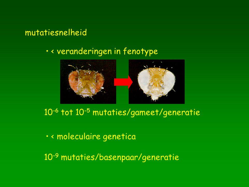 mutatiesnelheid < veranderingen in fenotype. 10-6 tot 10-5 mutaties/gameet/generatie. < moleculaire genetica.