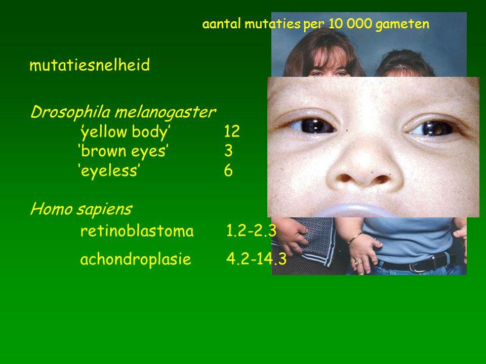Drosophila melanogaster 'yellow body' 12 'brown eyes' 3 'eyeless' 6