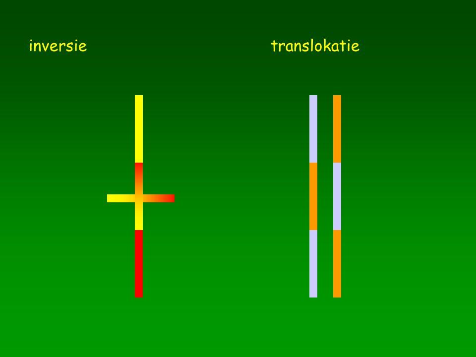 inversie translokatie