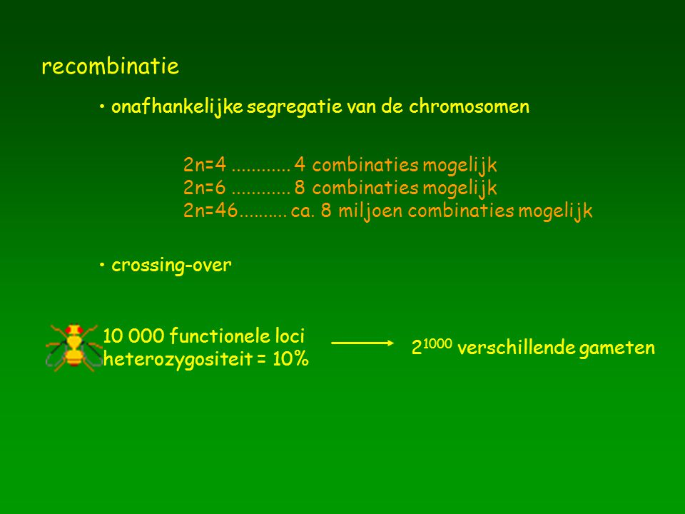 recombinatie onafhankelijke segregatie van de chromosomen