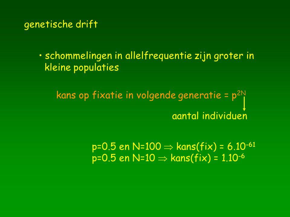 genetische drift schommelingen in allelfrequentie zijn groter in. kleine populaties. kans op fixatie in volgende generatie = p2N.