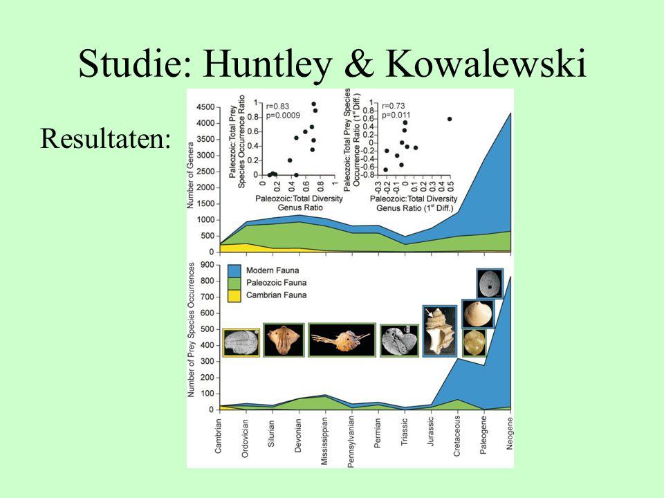 Studie: Huntley & Kowalewski