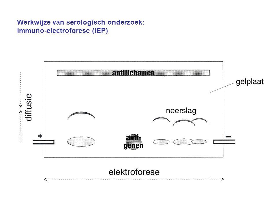 Werkwijze van serologisch onderzoek: Immuno-electroforese (IEP)