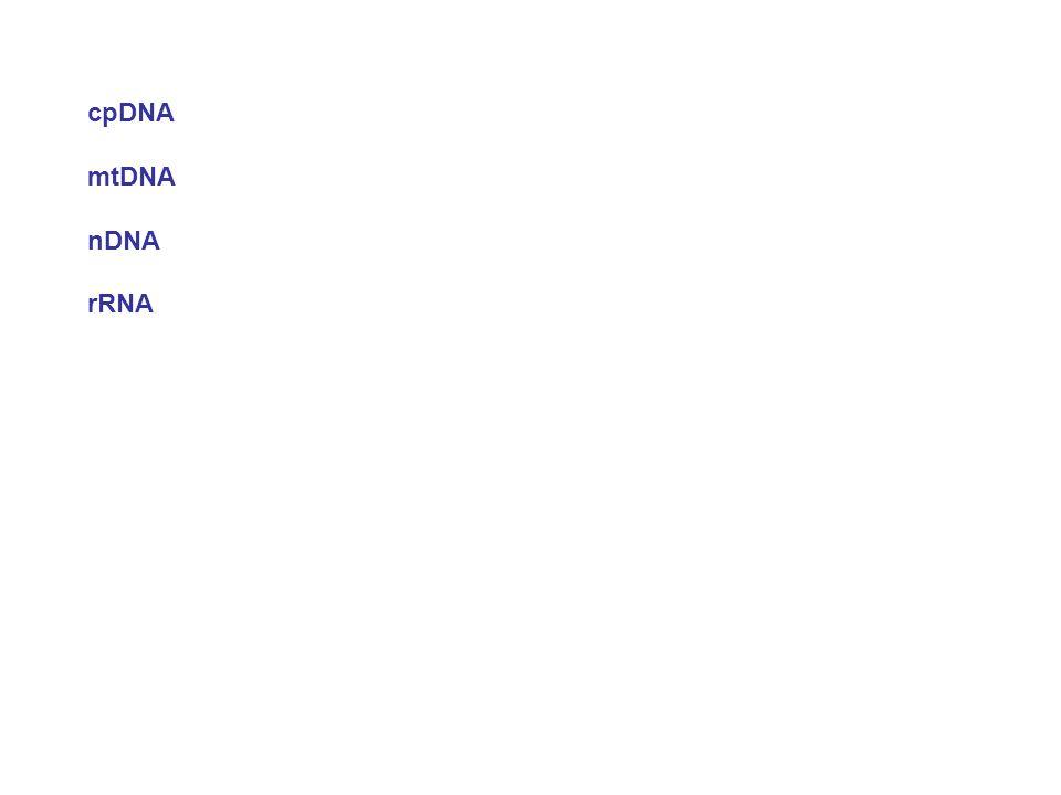cpDNA mtDNA. nDNA. rRNA.